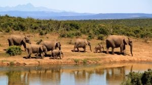 Watch elephants walk along the riverbank from your balcony during your South African safari getaway.